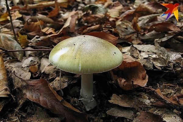Умер мужчина из семьи, которая отравилась грибами в Кобрине