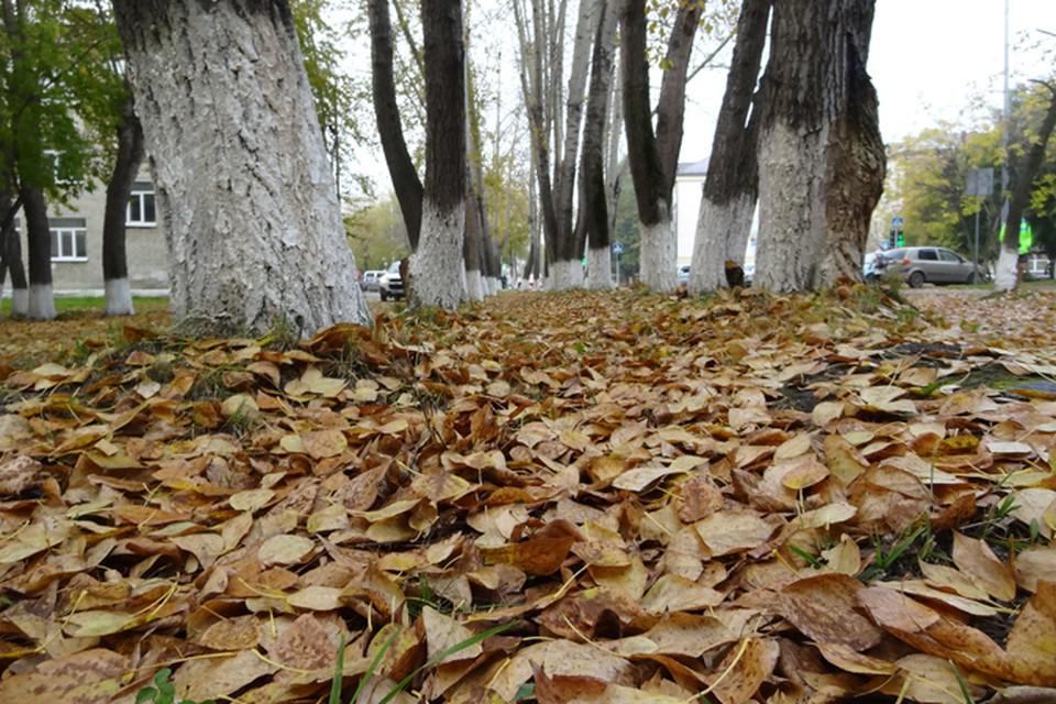 Погода в Югре 9 октября: тепло и без осадков