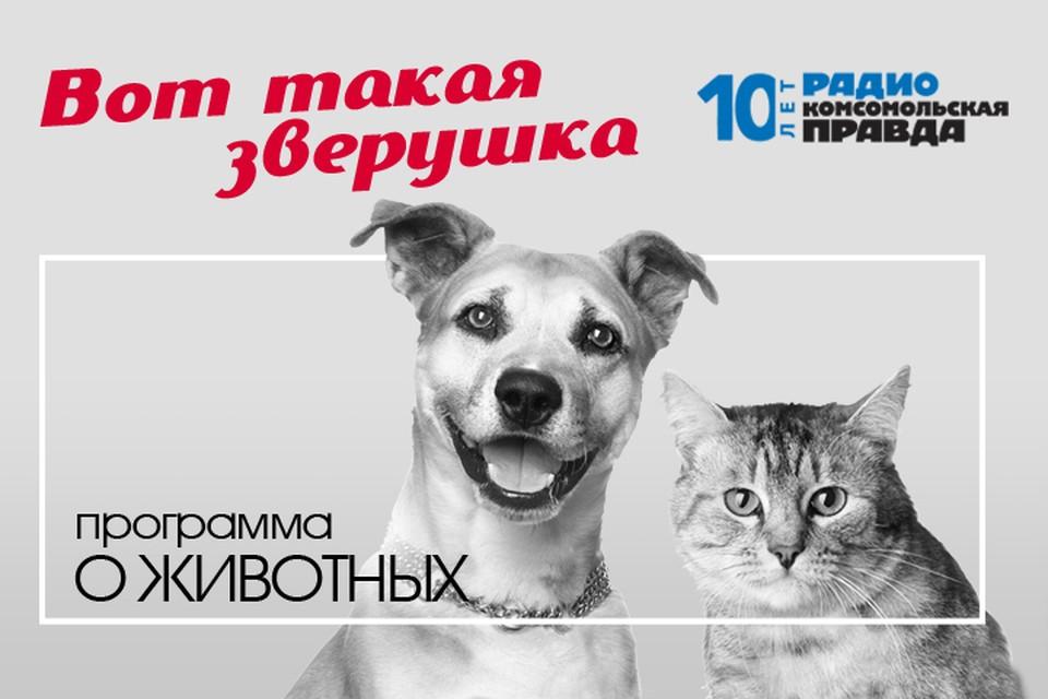 Трагедия в Перми: могла ли свора собак растерзать пенсионерку