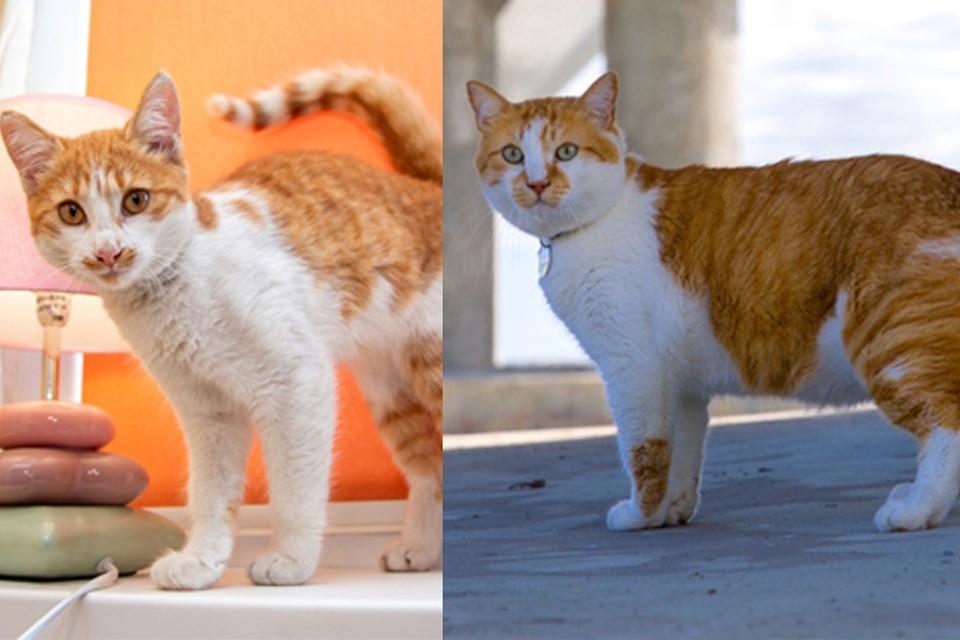 Зайка (слева) просто копия кота Мостика (справа)