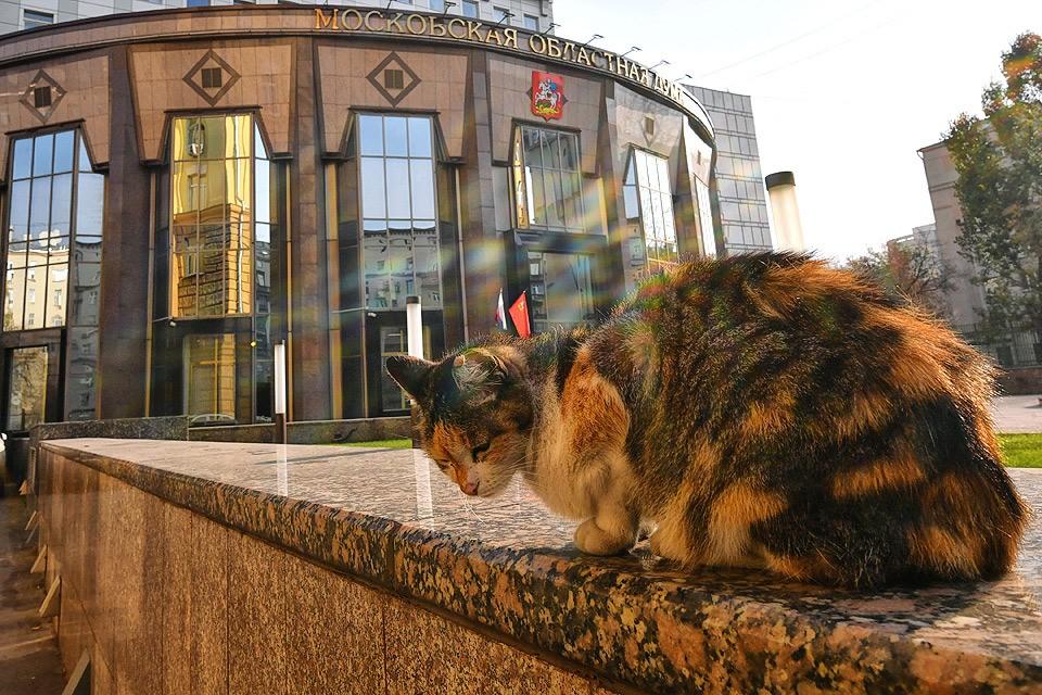 Бездомная кошка у здания Мособлдумы.