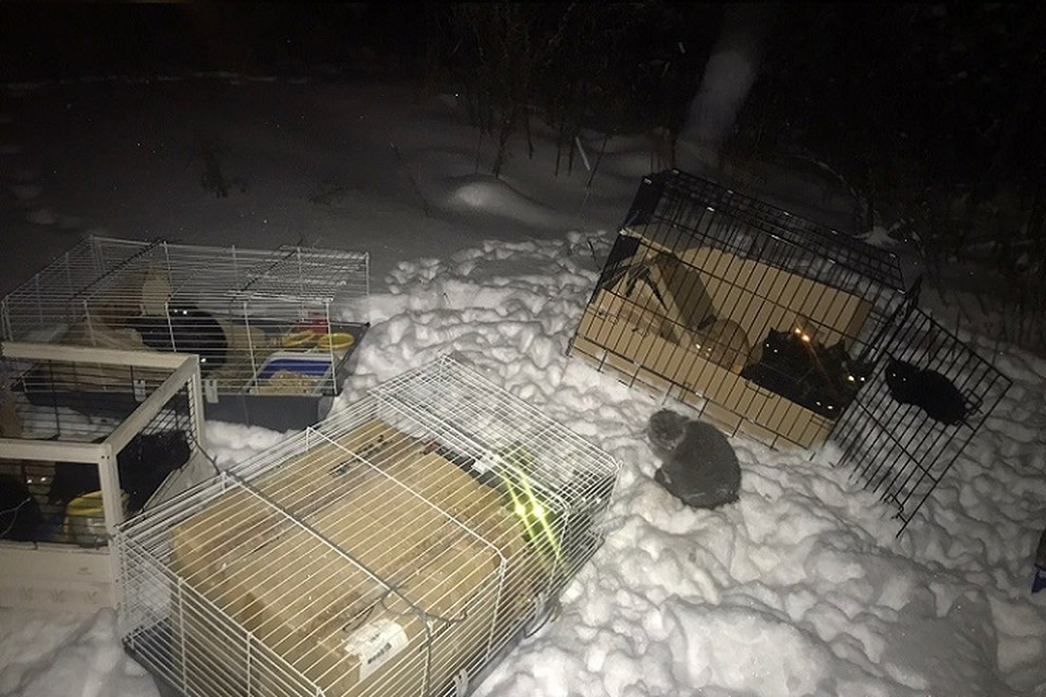 «Рядом – миски и лотки»: неизвестные выбросили на трассе под Сургутом клетки с 28 кошками. Фото: Дай лапу