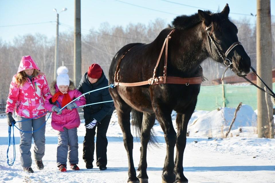 """В Челябинске придумали, как приспособить редкий вид спорта - конный скиджоринг - для реабилитации особенных детей Фото: центр """"Добрая лошадка"""""""