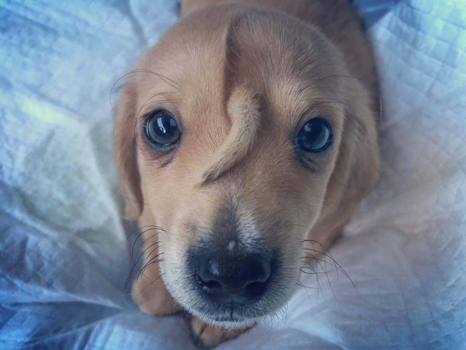 Хвост на лбу - деталь собаке не нужная, но именно он сделал Нарвала знаменитым