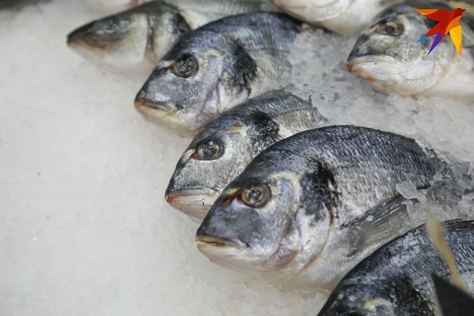 Северные рыбы могут помочь наладить производство желатина в России.