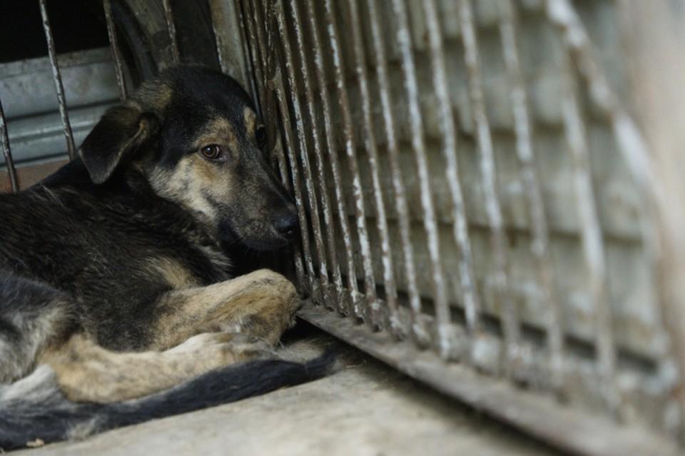 Собак, покусавших ребенка в Полярном, отловили.