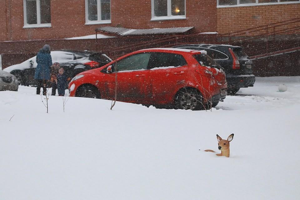 Снег будет идти несколько дней подряд