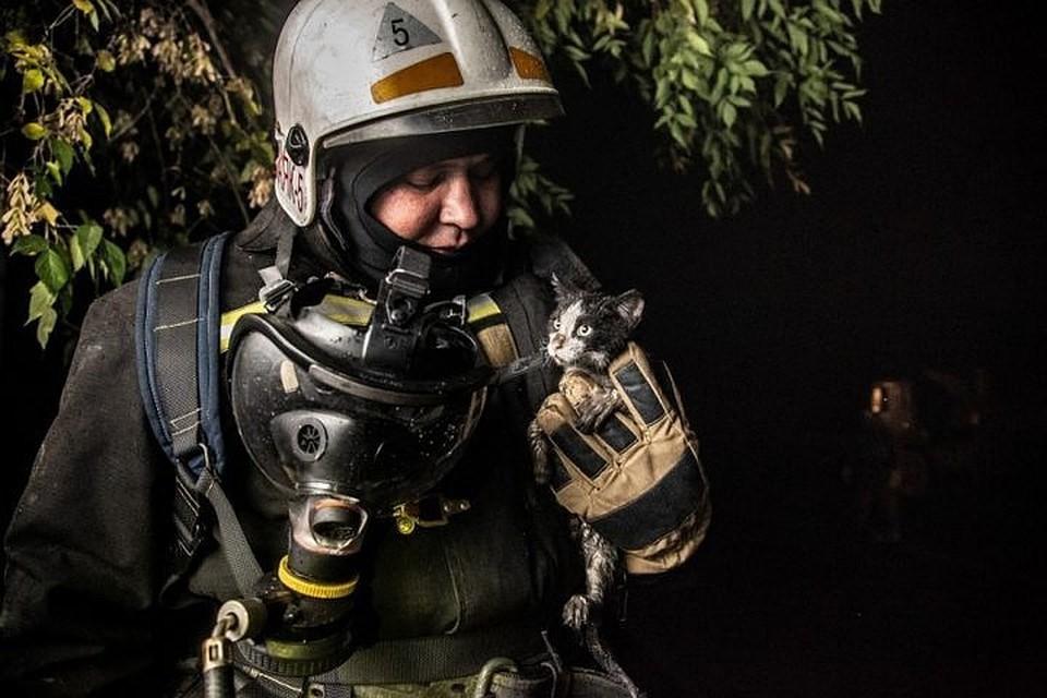 Кота их огня спасли новосибирские пожарные. Фото: Виктор Боровских/ГУ МЧС России по Новосибирской области.