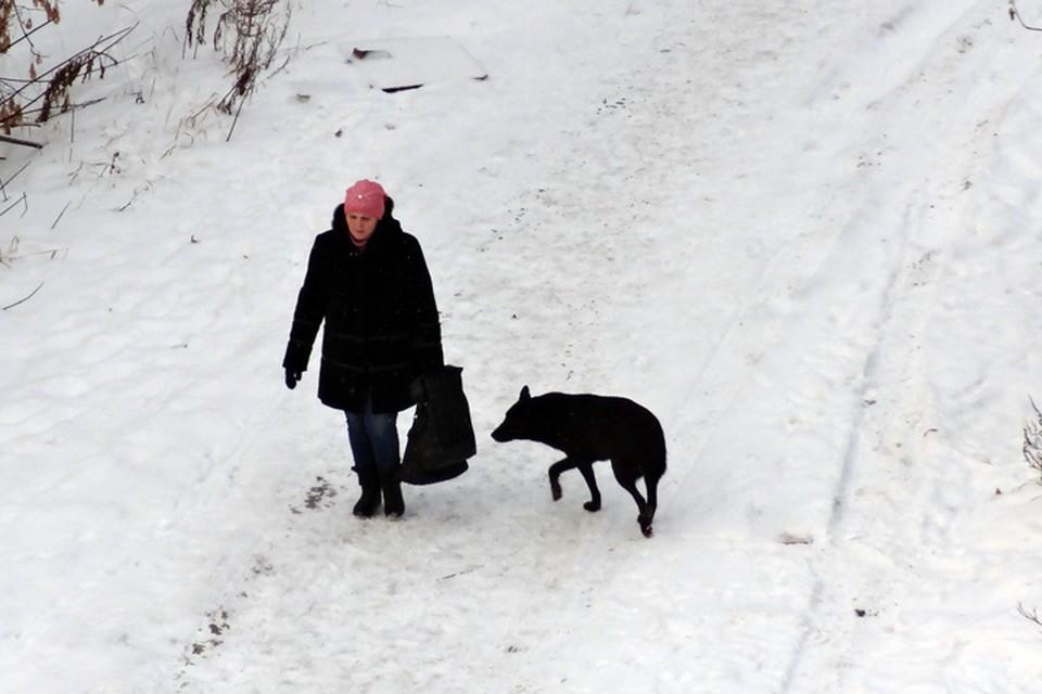 Тюменцам рассказали, как выгуливать и кормить собаку зимой