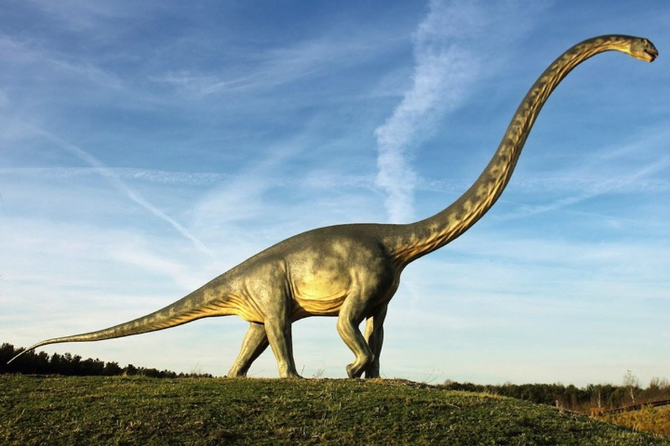 Некоторые завроподы весили под 80 тонн.
