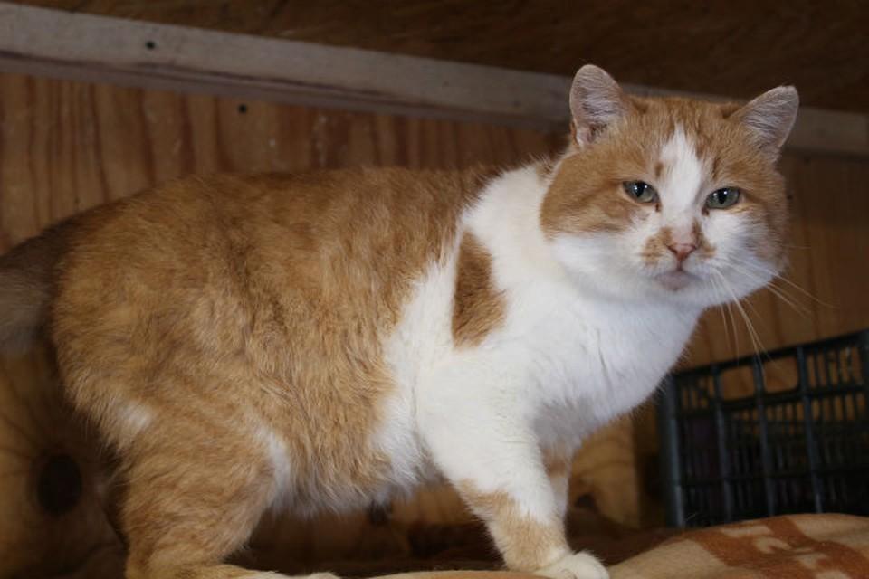 """Кота """"продали"""" вместе с домом: хозяева заперли старого Барсика в комнатах и уехали навсегда. Фото: частный приют для кошек """"Томасина"""" в соцсетях."""