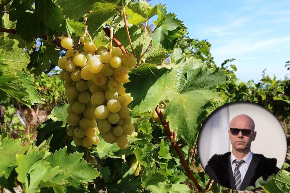Попробовать вино получится не скоро - для начала надо собрать первый урожай.