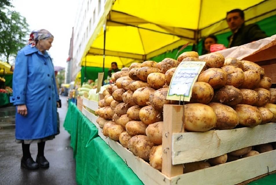 Докопались: Почти весь ввозимый в Молдову картофель заражен