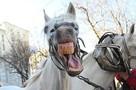 «Это победа!»: мужчину, включавшего по ночам лошадиное ржание, обвинили в психологическом насилии над соседями