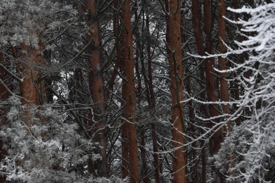 В Чебаркульском районе дровосека убило деревом.