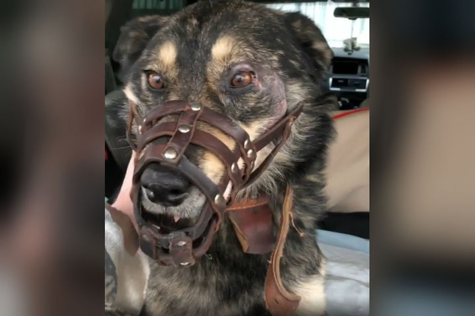 Три дня лежала на морозе со сломанной лапой: бездомную собаку переехали на автомобиле и бросили на верную смерть. Фото: mv__38 в Инстаграме.