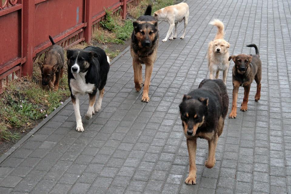 Точное число убитых собаками косуль власти назвать не могут, однако уверяют – псы загрызли несколько десятков животных.