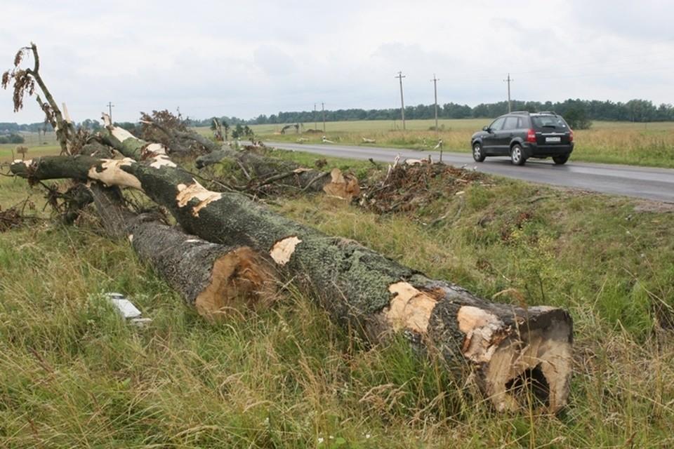 Тяжесть последствий при столкновении с деревьями на обочинах - самая высокая среди всех видов ДТП.