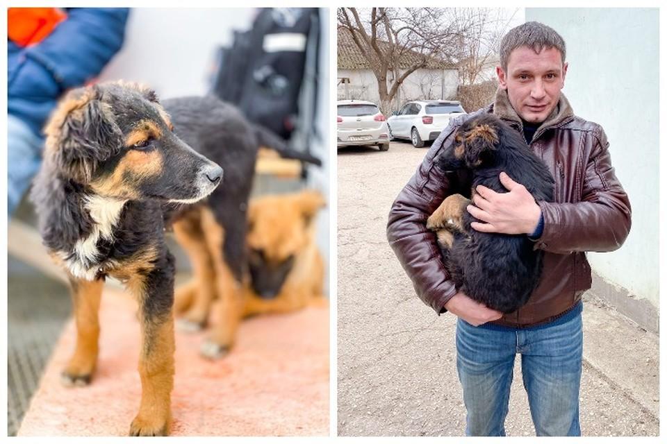 Щенок с Крымского моста нашел своего хозяина. Фото: кот Мостик/VK