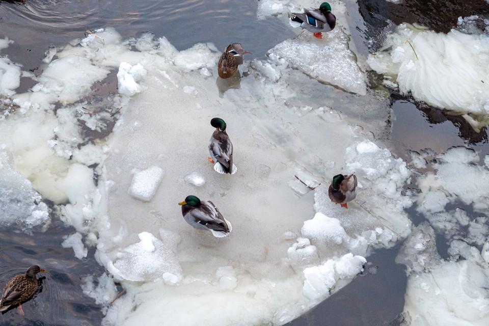 МЧС убедительно простил петербуржцев и жителей Ленобласти не выходить на лед.