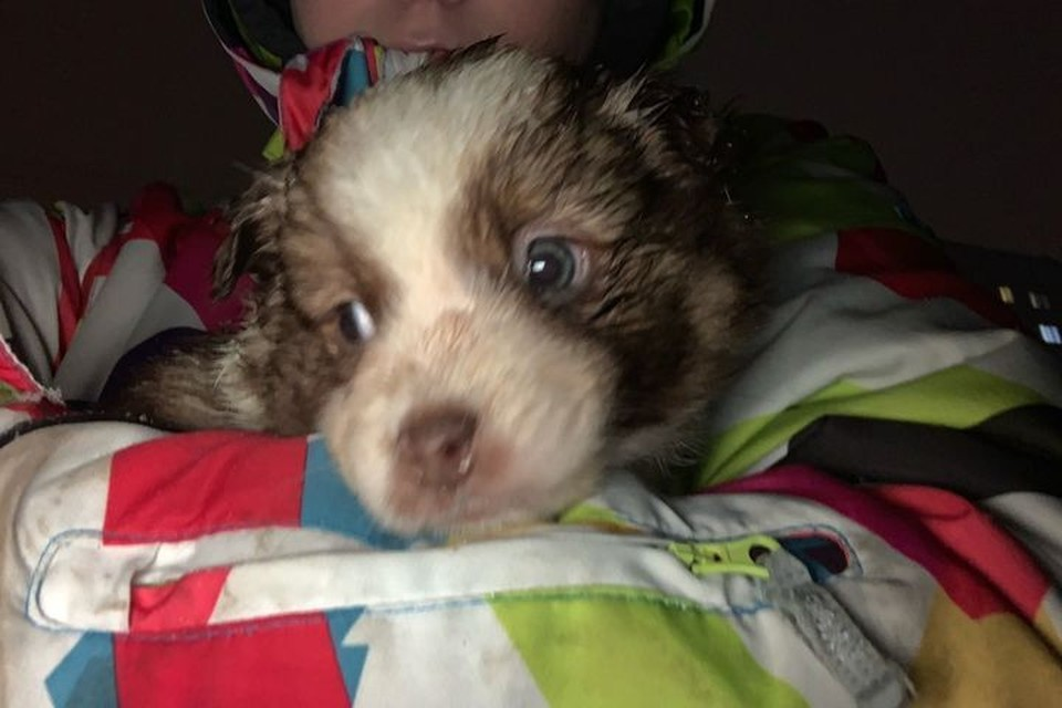 Среди спасенных собак были и крохотные щенки. Фото: Анастасия Лободина