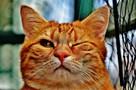 «КП-Воронеж» объявляет о начале голосования за самого очаровательного котика