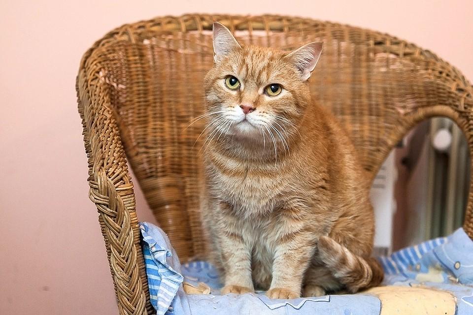 умер котенок от коронавируса