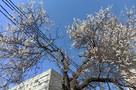 На Кубани к концу недели ожидается похолодание