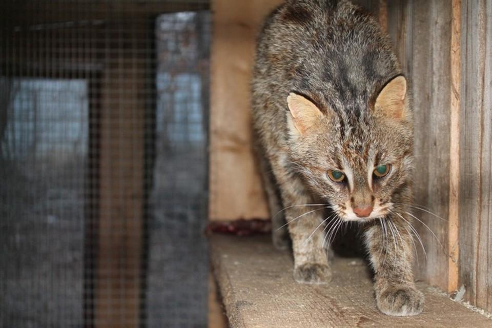 """Зоопарк """"Садгород"""" обратился к приморцам с просьбой спасти животных от голода."""