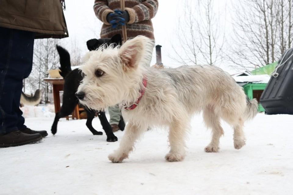 Выходить на прогулку с собакой можно не дальше 100 метров от дома.
