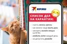 KP.RU продолжает серию онлайн-лекций