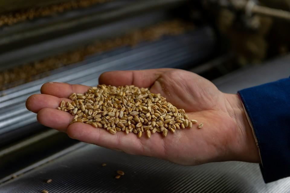 Чтобы создать десятки сортов муки, мукомолам и технологам нужны всего два ингредиента – пшеница и рожь