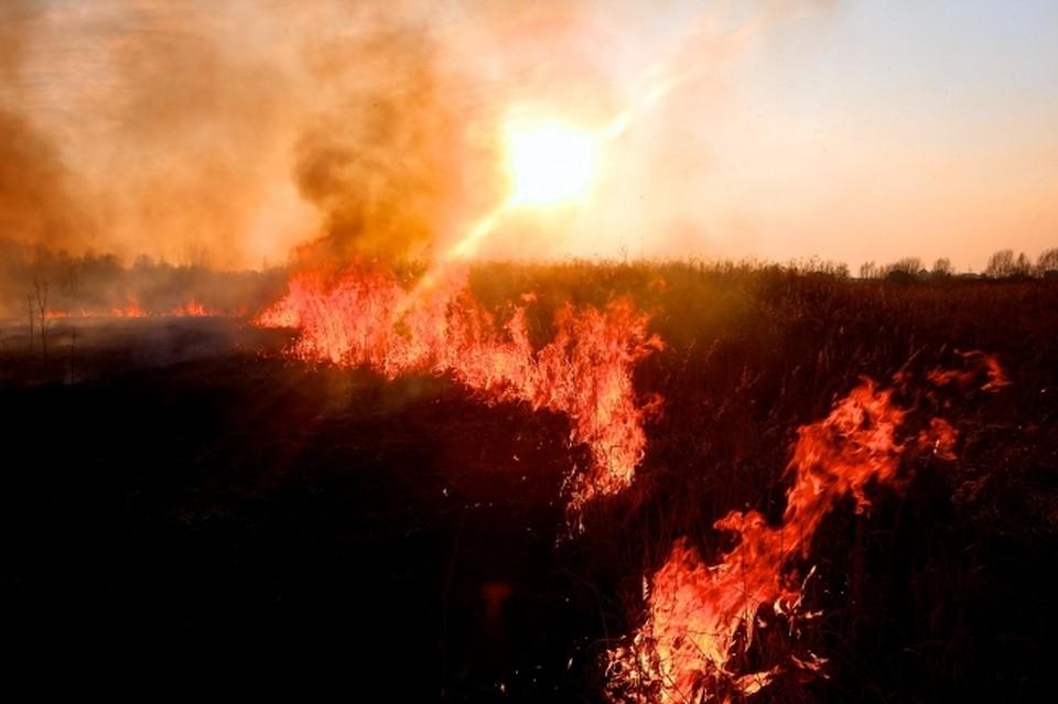Четыре лесных пожара ликвидировали в Хабаровском крае 6 апреля 2020 года