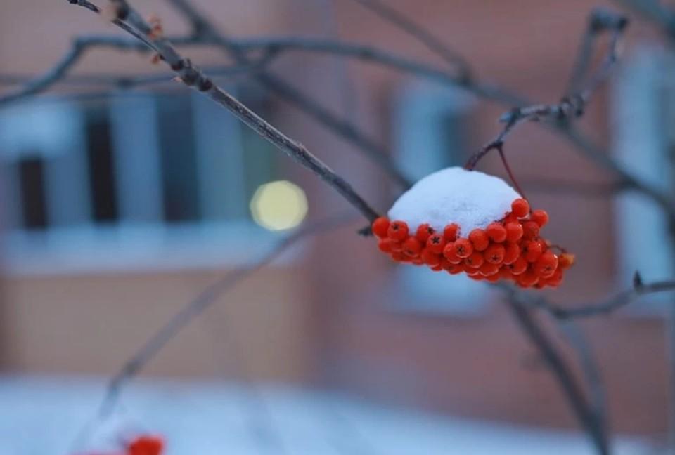 На Кубань нагрянут заморозки до -6 градусов
