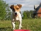 Российская кинологическая федерация рассказала, как действовать в случае пропажи собаки