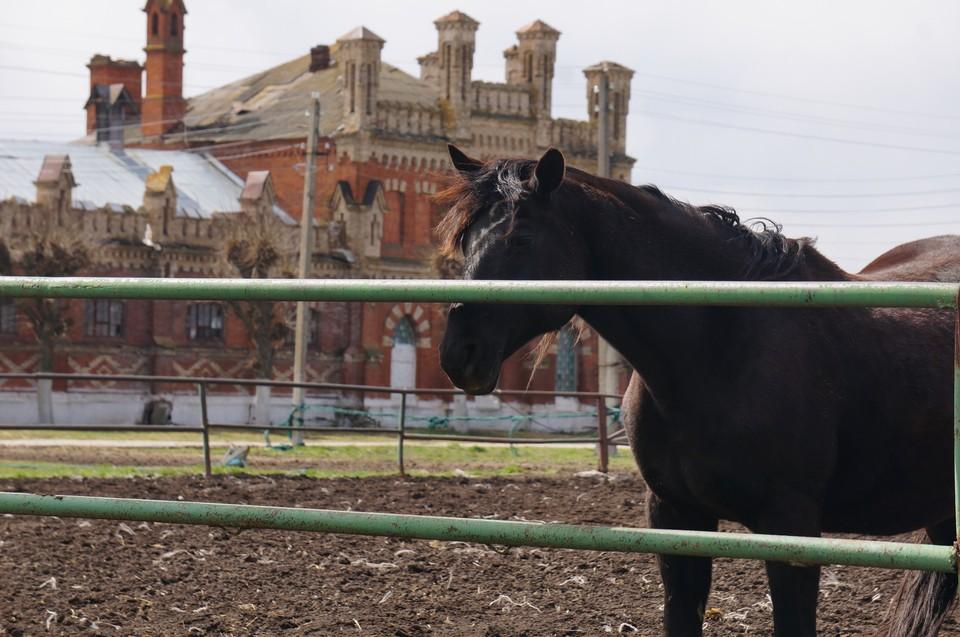 Судьба лошадей и одной из самых узнаваемых достопримечательностей Рязанской области неразрывно связаны: не будет одного – погибнет и другое.