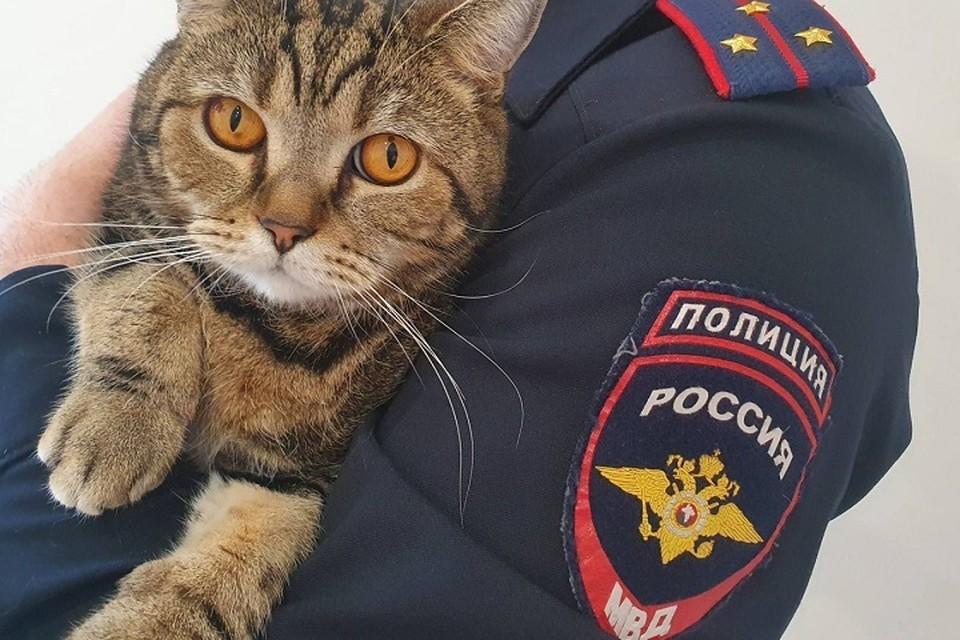 Работавший оперативник прекрасно понимал хозяев исчезнувшего экзота, ведь дома у него свой любимый кот Макс