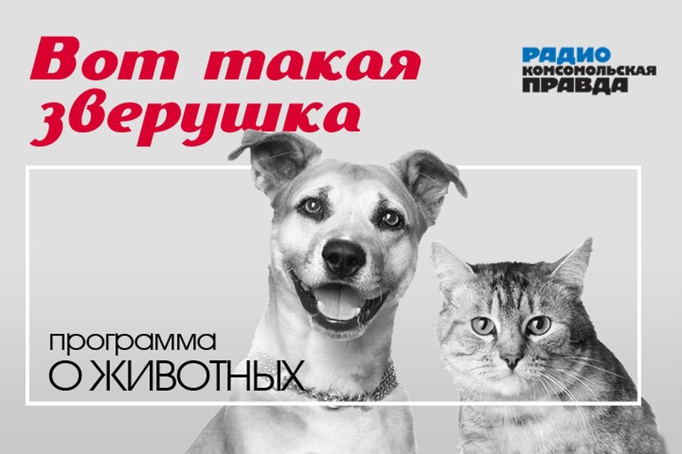 Бесплатная консультация ветеринарного врача: отвечам на вопросы слушателей