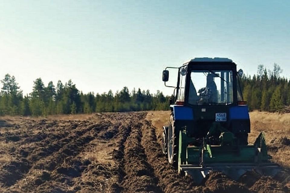В Надымском районе готовятся сажать картофель Фото: yanao.ru