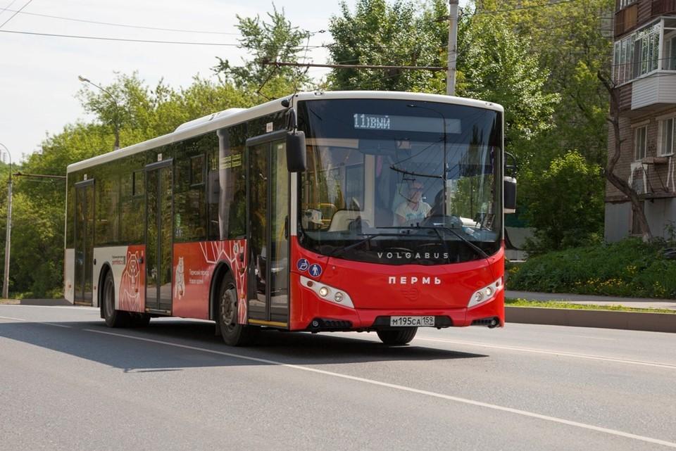 Было приобретено 65 дизельных и 20 газомоторных автобусов марки Volgabus.