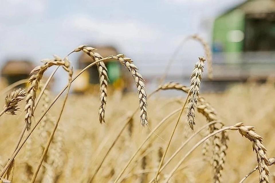 По льготной ставке с начала 2020 года банк предоставил аграриям более 114 млрд рублей