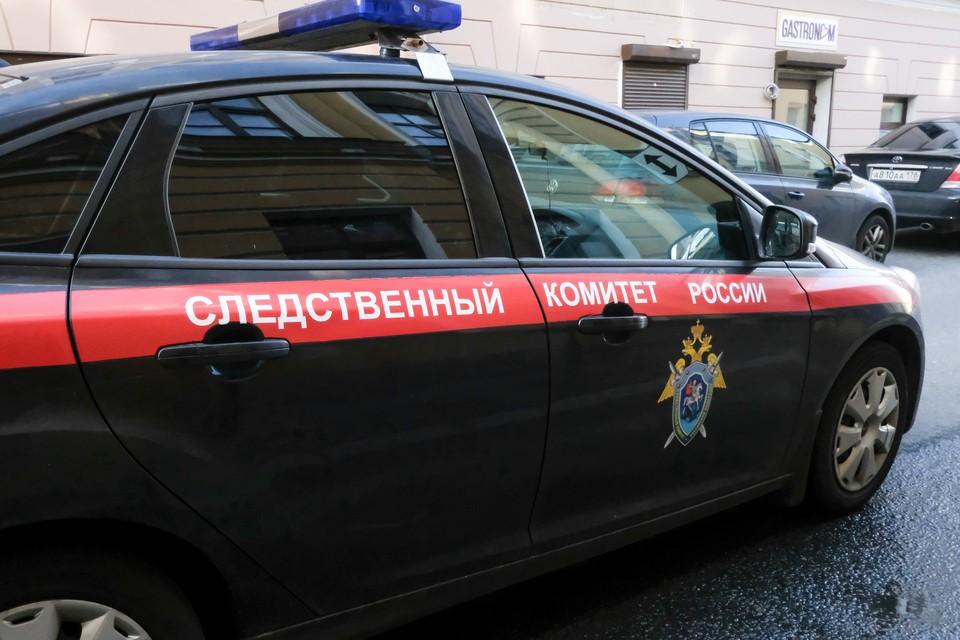 Следком начал проверку сообщения о нападении бродячих собак на девочку в Сосновом Бору