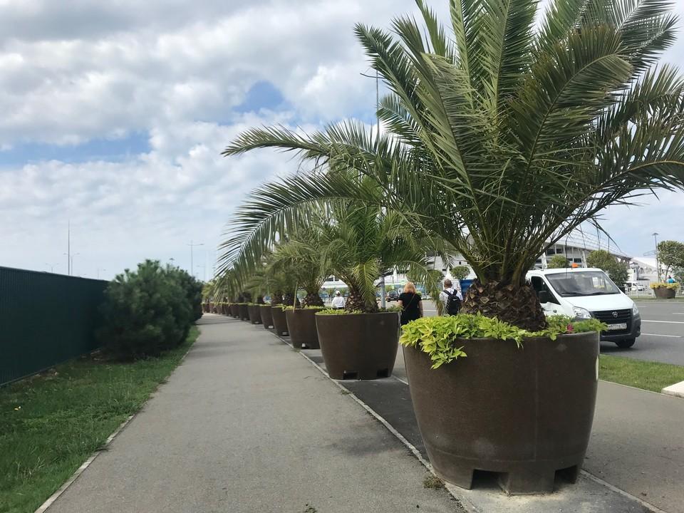 1 июня в кубанских здравницах открывается курортный сезон.