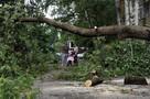 В Москве сильный ветер повалил 42 дерева