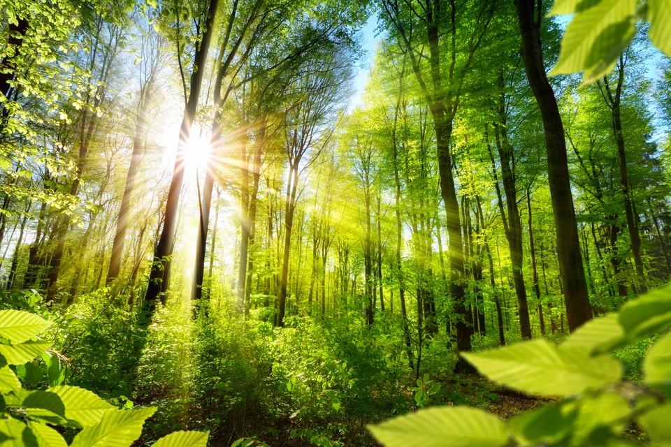 План по искусственному восстановлению лесов России к середине июня выполнен на 72%. Фото: shutterstock.com.