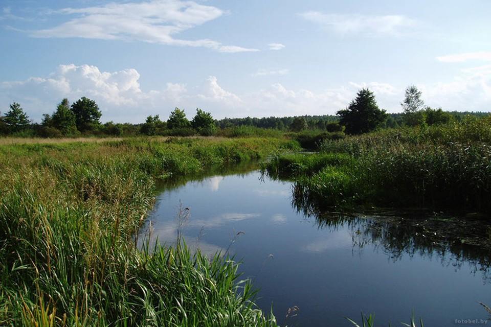 В Калинковичском районе мужчина решил покупаться и утонул. Фото: fotobel.by
