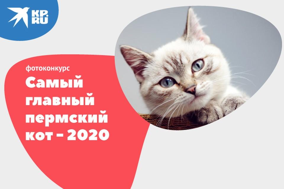 Ваш диванный пушистик теперь может прославиться на весь Пермский край. Фото: Константин Чернов