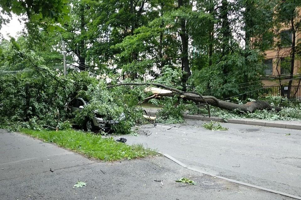 Спасатели убирают поваленные деревья в Петербурге. Фото: vk.com/spb_today