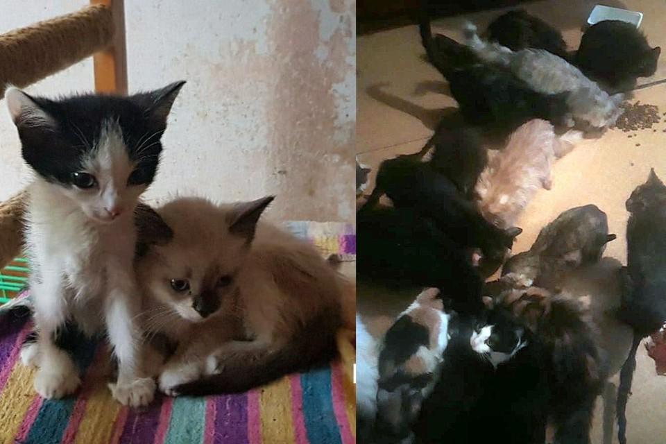У женщины в квартире было 47 кошек.Фото: «Бердская потеряшка»/личный архив героя