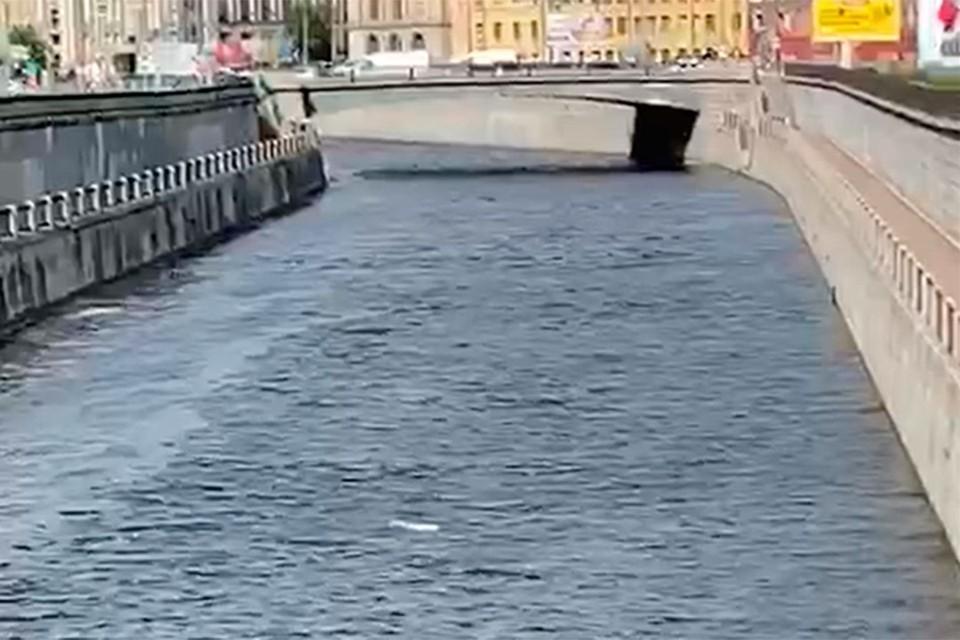 """""""Поющий труп"""" всплыл в Обводном канале в Петербурге"""
